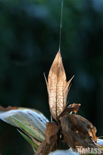 Fil d'araignée au sommet d'une plante séchée